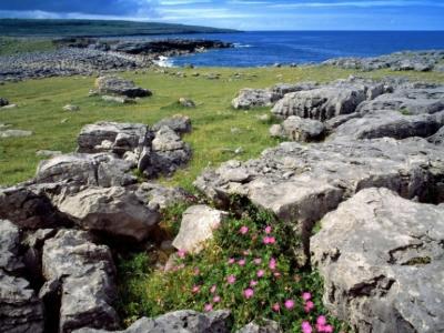 Wild flowers on the Burren ireland